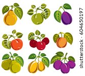 collection of simple fruits... | Shutterstock .eps vector #604650197