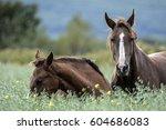 wild horses | Shutterstock . vector #604686083