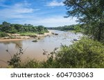 elephant river in kruger... | Shutterstock . vector #604703063