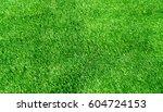 background of green grass... | Shutterstock . vector #604724153