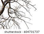 Tree Branch Silhouette...
