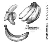 banana hand drawn collection by ... | Shutterstock .eps vector #604733177