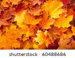 background group autumn orange... | Shutterstock . vector #60488686