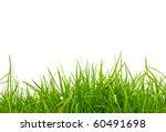 fresh spring green grass... | Shutterstock . vector #60491698