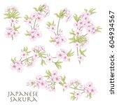 branch of cherry blossoms ... | Shutterstock .eps vector #604934567