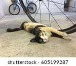 3 Colors Cat Scratching Bicycl...