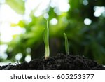 young plant or sprout | Shutterstock . vector #605253377