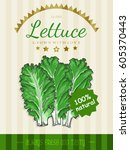 vector poster with a lettuce in ... | Shutterstock .eps vector #605370443