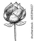 hand drawn and sketch lotus... | Shutterstock .eps vector #605396027