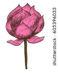 hand drawn and sketch lotus... | Shutterstock .eps vector #605396033
