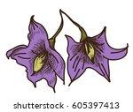 hand drawn solanum flower | Shutterstock .eps vector #605397413