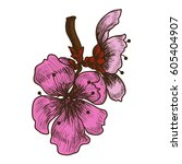 hand drawn peach blossom or... | Shutterstock .eps vector #605404907