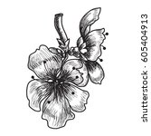 hand drawn peach blossom or... | Shutterstock .eps vector #605404913