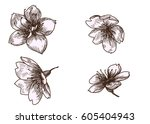 hand drawn peach blossom or... | Shutterstock .eps vector #605404943