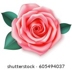 decorative pink rose with... | Shutterstock .eps vector #605494037