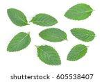 fresh mint leaves isolated on... | Shutterstock . vector #605538407