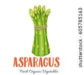 vector asparagus . vegetable... | Shutterstock .eps vector #605785163
