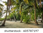 palm leaves.tropical forest on... | Shutterstock . vector #605787197