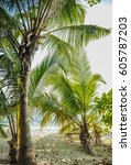 palm leaves.tropical forest on... | Shutterstock . vector #605787203