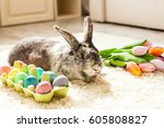 Easter Rabbit In The Room On A...