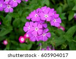 The Flower Have Violet Colour...
