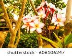 the flowers | Shutterstock . vector #606106247