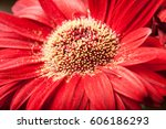 detail of the center of a red... | Shutterstock . vector #606186293