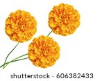 bright colorful flowers...   Shutterstock . vector #606382433