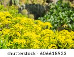 Yellow Flower Cluster On A...
