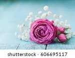 Beautiful Pink Rose Flower And...