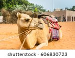 a camel for the tourist riding... | Shutterstock . vector #606830723