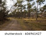 Small photo of Footpath in Landscape in nature reserve in Zeist called Bornia