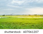 row of rice field  farm with a  ... | Shutterstock . vector #607061207