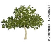 fig tree  ficus carica  in the... | Shutterstock .eps vector #607088387