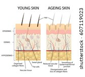 young healthy skin and older... | Shutterstock .eps vector #607119023