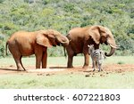 Elephants Drinking Water While...