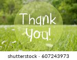 gras meadow  daisy flowers ... | Shutterstock . vector #607243973