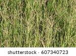 High Desert Wild Grass With...