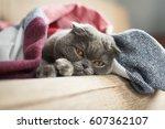 sad cat lying under blanket at...   Shutterstock . vector #607362107