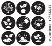 plant growing icons set. white... | Shutterstock .eps vector #607433183
