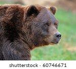 Alaskan Brown Bear  Grizzly
