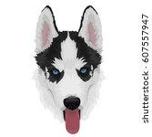 black and white siberian husky... | Shutterstock .eps vector #607557947