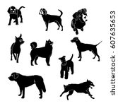 Stock vector  silhouettes of dogs of different breeds 607635653