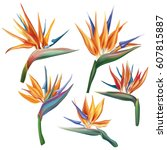 strelitzia reginae flower  bird ...   Shutterstock .eps vector #607815887