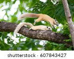 Two White Squirrels Jump Over...