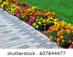 Flowerbed Of Different Colors...