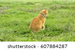 Orange Tabby Cat Looking Away