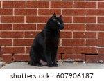 Stock photo black cat 607906187