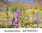 Lupine Flowers  Field Of...