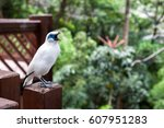 Bali Myna Bird At The Edward...